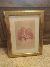 Set of two coral photos in Fort Leonard Wood, Missouri