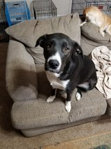 1 year old for a loving home in Fort Leonard Wood, Missouri