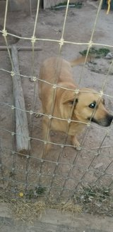 female dog in Alamogordo, New Mexico