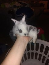 Rabbits to good home in Fort Campbell, Kentucky