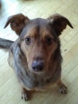 Looking for a dog sitter. in Stuttgart, GE