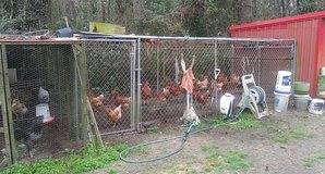 just started laying chickens in Beaufort, South Carolina
