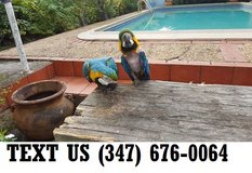 Able Blue and Yellow Macaw Parrots Available Now in Mobile, Alabama