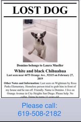 lost black and white chihuahua in Miramar, California