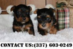 Pets: Adoption For Sale In Brookfield, WI   Brookfield Bookoo