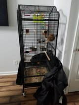 Lovely LoveBirds with 5' cage in Fort Campbell, Kentucky