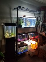 Fish water for plants in Alamogordo, New Mexico