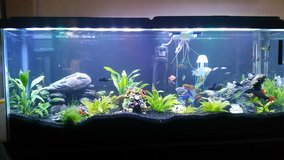 75 Gallon Fish Aquarium in Fort Riley, Kansas