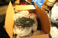 Lot of Christmas Lights (11 strings) in Chicago, Illinois