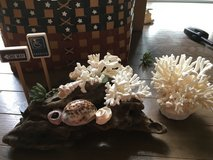 Beach decor, shells, basket and more! in Okinawa, Japan