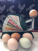Free Range Chicken Eggs For Sale in Yucca Valley, California