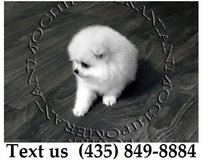 Chico Pomeranian Puppies For Adoption, For Info Text at (435) 849-8884 in Fort Knox, Kentucky