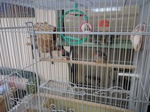 Two finches plus cage and accessories in Miramar, California