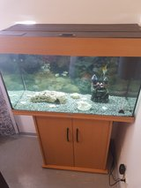 FIsh tank in Ramstein, Germany