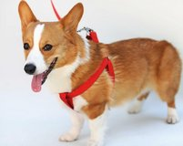 Brand New Step in adjustable pet harness size Small in Camp Lejeune, North Carolina