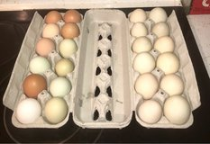 fresh chicken or duck eggs in Rolla, Missouri