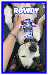 ?????  98 RESCUED DOGS WHO NEED NEW HOMES  ????? in Spring, Texas