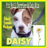 *** HI I'M DAISY....My 2nd BIRTHDAY is on January 31st and I REALLY NEED SOMEONE TO SPEND IT WIT... in Spring, Texas