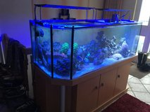 210 Gallon Tank and Stand in Stuttgart, GE