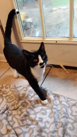 free male cat in Leesville, Louisiana