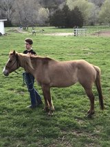 selling mare in Fort Leonard Wood, Missouri