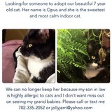 Beautiful black and white female cat in Chicago, Illinois