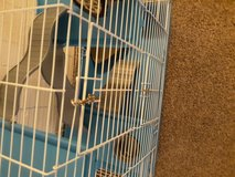 Ferret and cage in Fort Riley, Kansas