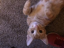 kitty to a good home in Fort Lewis, Washington