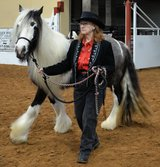 Gypsy Vanner Show Mare in The Woodlands, Texas