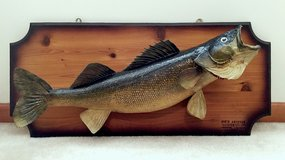 "28"" Walleye Pike Taxidermy Fish Mount For Sale in Joliet, Illinois"