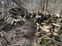 FREE FIREWOOD in Bolingbrook, Illinois