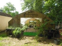 we still have a lot of plants for sale in Kingwood, Texas