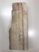 Fossilized wood from Bali in Okinawa, Japan