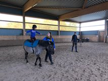 Pony Volting in Ramstein, Germany