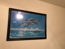 Dolphin picture in 29 Palms, California
