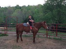 Quarter horse mare in Clarksville, Tennessee