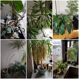 Various plants and pots.. in Stuttgart, GE