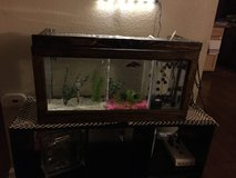 Custom Fish Tank in Camp Pendleton, California