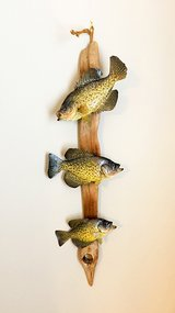 Three Crappie On Driftwood Taxidermy Art Wall mount in Joliet, Illinois