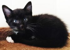 Free Kitten in Fort Campbell, Kentucky