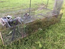 Rabbit cages in Fort Polk, Louisiana