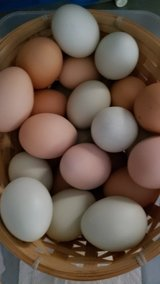chicken eggs in Alamogordo, New Mexico