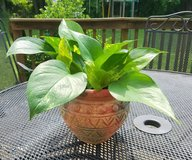 Pothos Plant in Multi-Colored  Clay Pot in Fort Campbell, Kentucky
