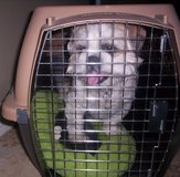"""Petmate"" Crate for Small to Medium Size Dogs or Cats in El Paso, Texas"