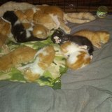 13 kittens ready June 27th for ADOPTION in Fort Campbell, Kentucky