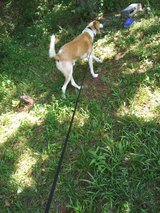 Lost Dog in Camp Lejeune, North Carolina