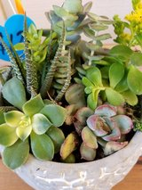 Succulents and arrangements at low prices in Vista, California