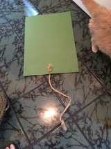 "cat toy - ""yoga mat"" with sisal rope in DeKalb, Illinois"