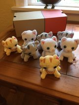8 stuffed kittens in DeKalb, Illinois