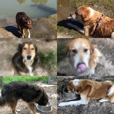 brother and sister pair need an immediate home in Baytown, Texas